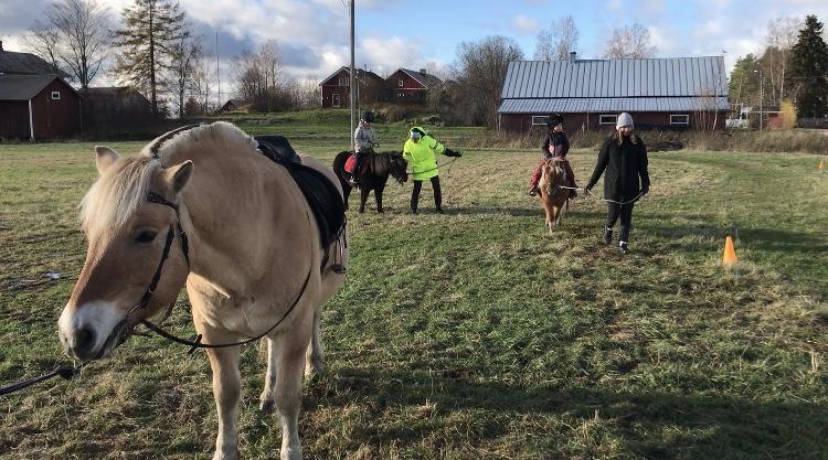 Ylistaron Mäki-Pohdon uudistetun ratsastuskentän avajaisia vietettiin aurinkoisessa säässä